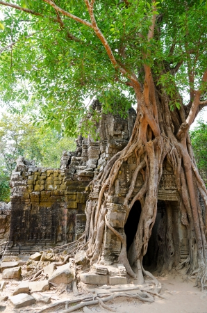 kingly: banyan rooting in stones of eastern gate of Ta Som temple, Angkor Stock Photo