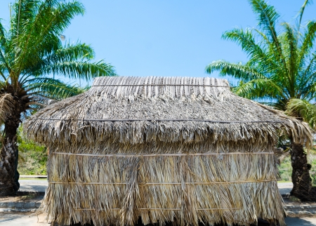 thatched hut between palms under blue sky Stock Photo - 19382822
