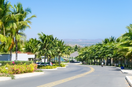 palm lined: highway lined with palm trees, sea resort southern Vietnam Stock Photo