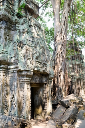 kingly: Preah Pithu is a temple complex of Angkor, rather ruined by jungle, Cambodia