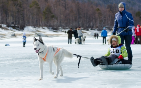 identified: YARTSI, RUSSIA - APRIL 14  At annual Baikal Fishing the 1st Mushing on inner tubes was run, Apr 14, 2012, Yartsi, Buryatia, Russia  A Siberian husky dog pulls an identified boy on a tube on ice  Editorial