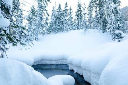 non freezing stream in winter wild firtree forest Standard-Bild