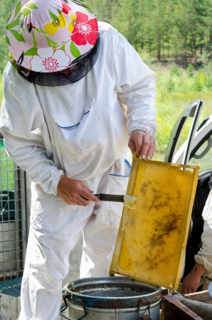 beekeeper cuts off wax from honeycomb frame photo