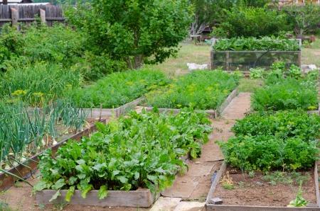 bedden bij moestuin met diverse groenten Stockfoto