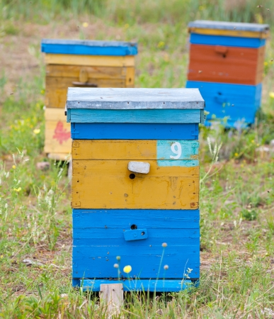 bee garden: una colmena de madera en un jard�n de la abeja de Siberia Foto de archivo
