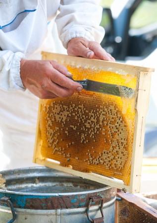 beekeeper cuts wax off to open honeycombs photo