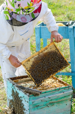 beekeeper take honeycomb frame out from beehive photo