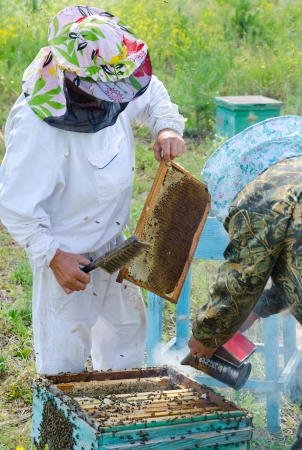two beekeepers smoke beehive and take out honeycomb frames photo