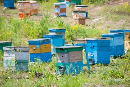 bee garden: jard�n abeja apiario en el bosque, en un d�a soleado de verano Foto de archivo