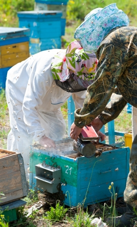 two beekeepers smoke beehive before they take out honeycomb frames photo