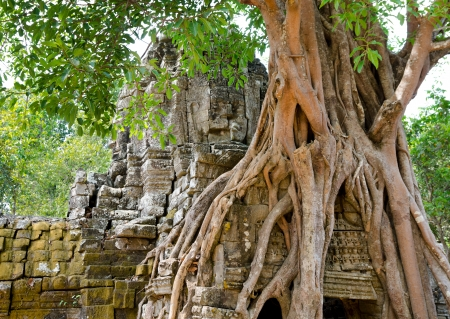 banyan tree: banyan rooting in stones of eastern gate of Ta Som temple, Angkor Stock Photo