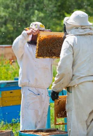 beekeeper: two beekeepers take honeycomb frames out from beehives