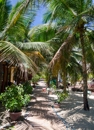 guesthouse: shady guesthouse yard with palms in Mui Ne, Vietnam