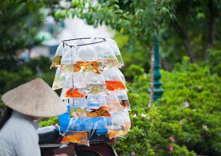 aquarian fish: a woman in a Vietnamese hat sells aquarian fish in packets Stock Photo
