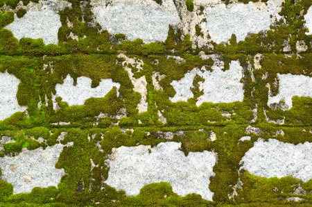 partly: stone wall partly covered with green lichen