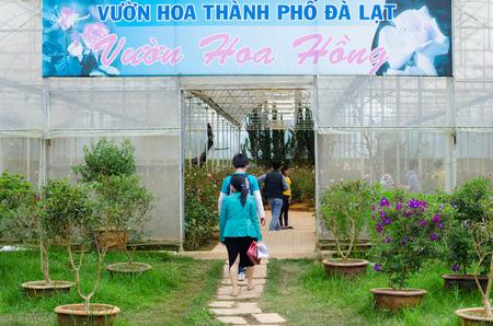 mimose: Dalat, Vietnam - 24 luglio 2014: i visitatori non identificati immettere una serra rosa nel Parco Fiore. Ospita centinaia di tipi di specie, tra cui ortensie, mimose, rose, orchidee e molti altri. Editoriali