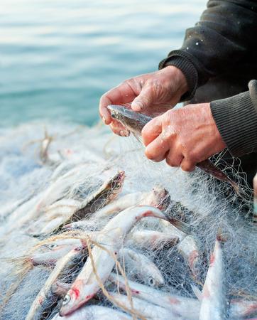 fishers hands take fish out of net - closeup shot
