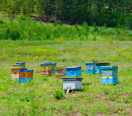 bee garden: apiary (bee garden) in Siberian forest, on summer sunny day Stock Photo