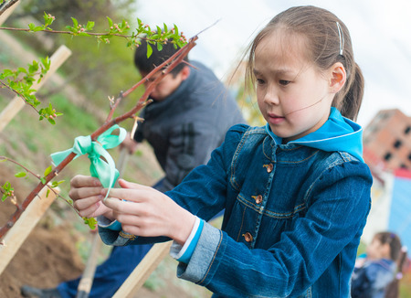 ulan ude: ULAN-UDE, RUSSIA - MAY 20, 2011: An unidentified schoolgirl ties up a ribbon on a young tree just been planted near the City Palace of Childrens Arts.
