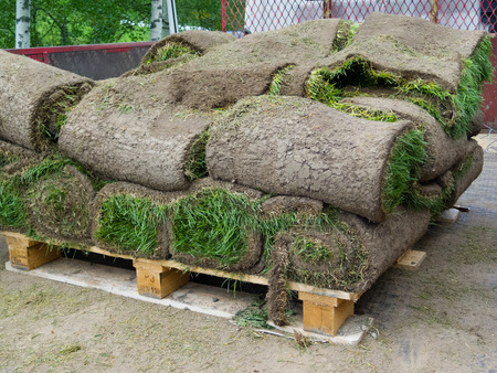 sod: rolled pieces of sod on wooden tray in truck