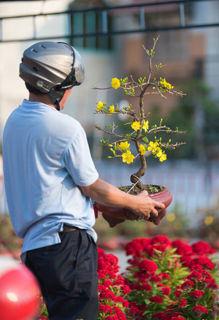 upper half: Vietnamese man examines apricot tree in blossom on Tet (Lunar New Year) Eve. The tree is like Christmas tree in western countries.