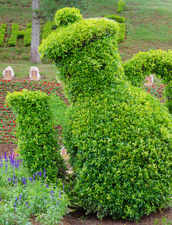 places of interest: DALAT VIETNAM JULY 24 2014: A bush triimed as a jug in the Flower Park one of the best places of interest in the city. Visitors can enjoy the biggest selection of flowers in Dalat.