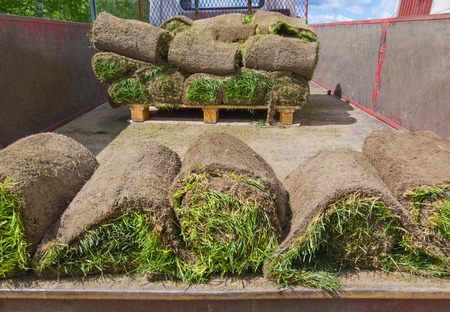 sod: rolled pieces of sod in truck, closeup