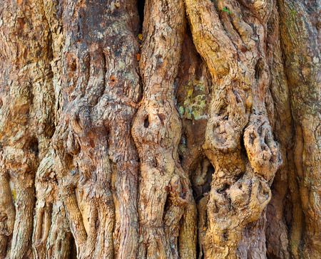 knotty: knotty tree bark, closeup, texture