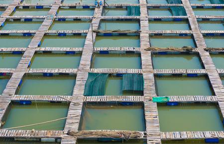 fish breeding: regular footbridges at fish breeding farm, Vietnam Stock Photo