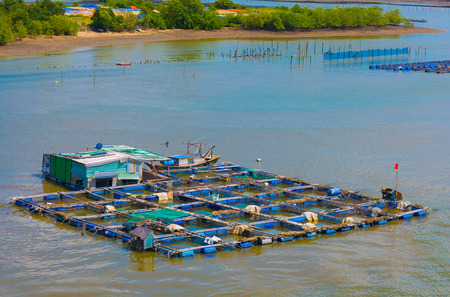 livestock sector: fish breeding farms on a river in the southern Vietnam