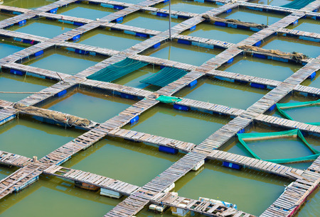 livestock sector: regular footbridges at fish breeding farm, Vietnam Stock Photo
