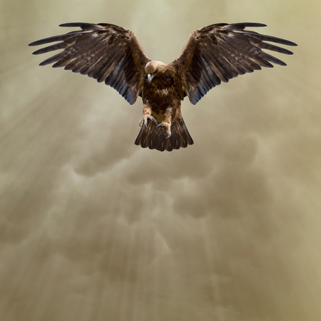 aguila real: águila con las alas extendidas en el cielo oscuro Foto de archivo