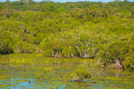 subtropics: mangrove forest and swamp in the southern Vietnam Stock Photo