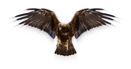 aquila: eagle with spread wings, motion blur, isolated