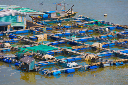 livestock sector: fish breeding farm on a river in the southern Vietnam