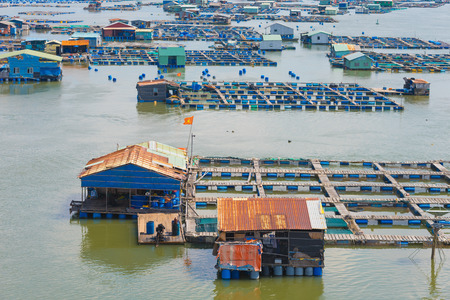fish husbandry: many fish breeding farms on a river in the southern Vietnam