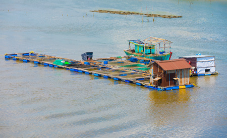 fish husbandry: fish breeding farm on a river in the southern Vietnam
