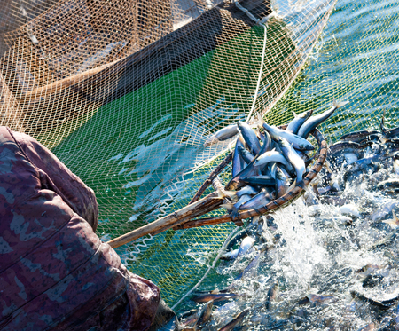 a fisher scoops up fish from a net Stock Photo