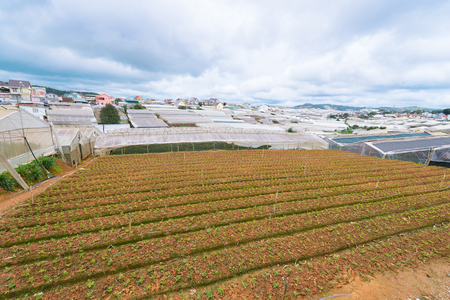 hotbed: farming plots of land and hotbeds on cloudy day