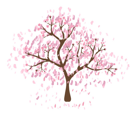 flor de cerezo: Beautiful cherry blossom tree on white background; made using vector graphics