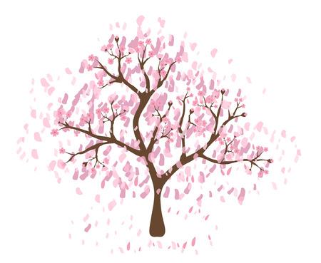 fleur cerisier: Bel arbre de fleurs de cerisier sur fond blanc; faite en utilisant des graphiques vectoriels