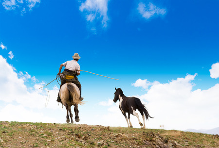 horse catching with lasso in Mongolian steppe