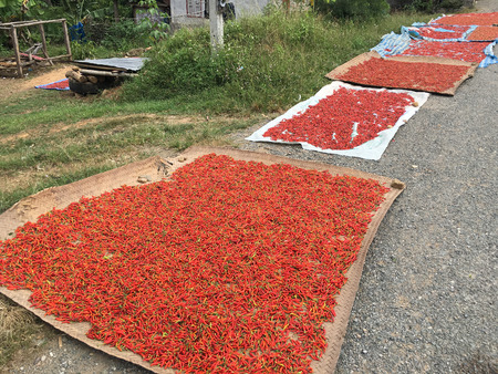 savour: lots of hot chili peppers getting dried by road