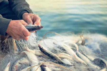 ręce wyciągają ryby z sieci