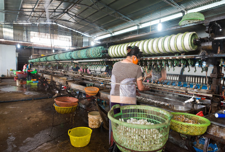 Unrecognizable women in masks immerse silk cocoons into boiling water at silk factory to unwind silkworm cocoon filaments