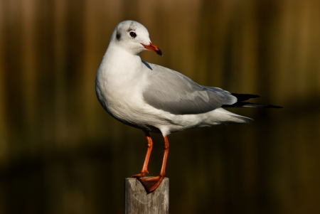 seagull standing alone on the bamboo photo