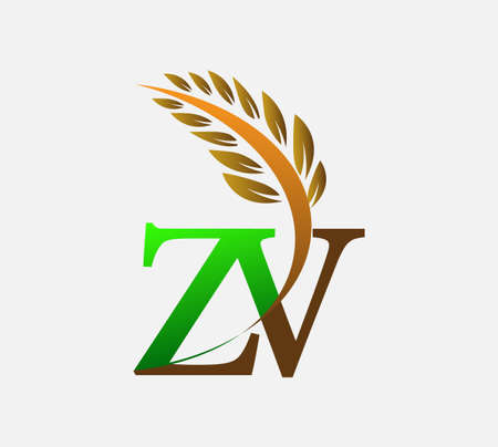 initial letter ZV, Agriculture wheat Template vector icon design colored green and brown.