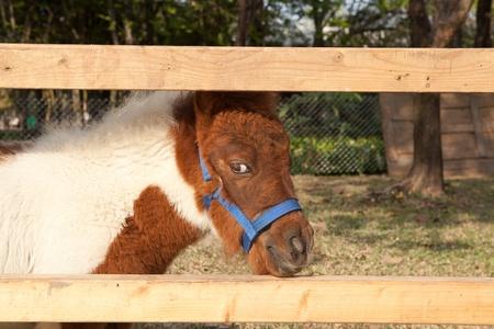 horses miniature photo