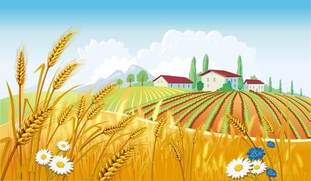 Paesaggio rurale con campi Vettoriali
