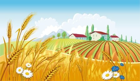 wheat illustration: Rural landscape with fields Illustration